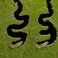 studia ochrona zdrowia roślin - entomologia