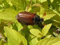 studia ochrona zdrowia roślin